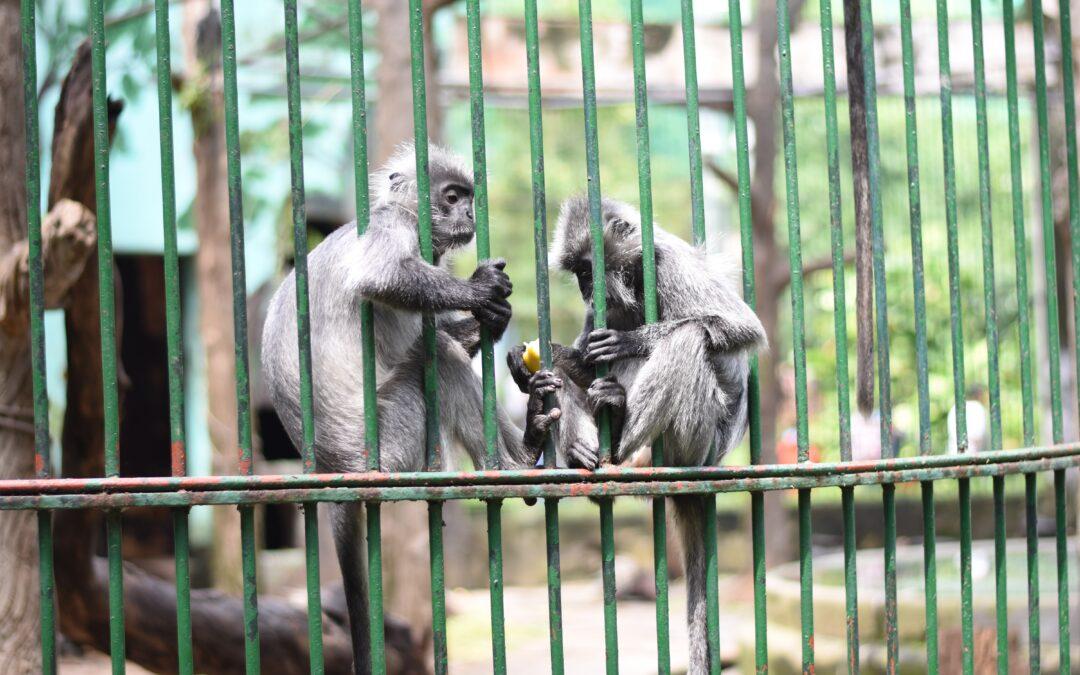 2 kleine Affen hinter grünen Gittern